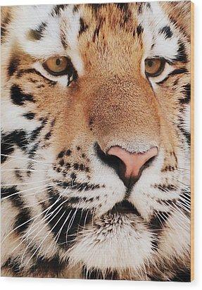 Eye Of The Tiger Wood Print by Ramona Johnston