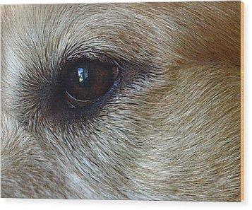 Eye See You Wood Print by Lisa Phillips