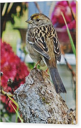Eyeing The Sparrow Wood Print