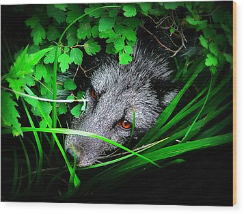 Eyes In The Bushes Wood Print by Zinvolle Art