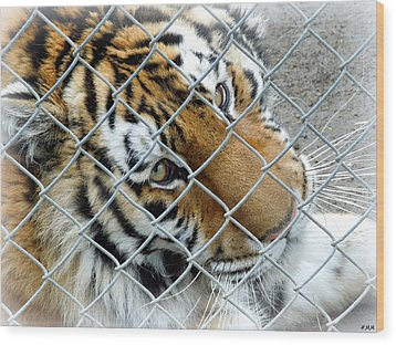 Eyes Of Captivity Wood Print by Heidi Manly