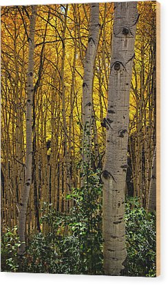 Wood Print featuring the photograph Eyes Of The Forest by Ken Smith