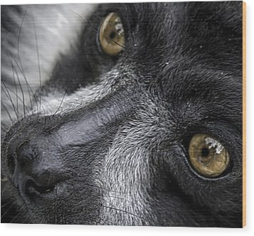 Wood Print featuring the photograph Eyes Of The Lemur by Chris Boulton