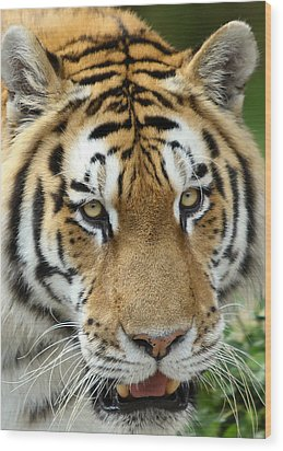 Wood Print featuring the photograph Eyes Of The Tiger by John Haldane