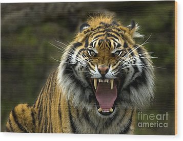 Eyes Of The Tiger Wood Print by Mike  Dawson