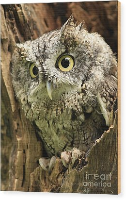 Eyes Of Wisdom Eastern Screech Owl In Hollow Tree Wood Print by Inspired Nature Photography Fine Art Photography