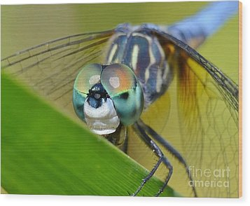 Wood Print featuring the photograph Face Of The Dragonfly by Kathy Baccari