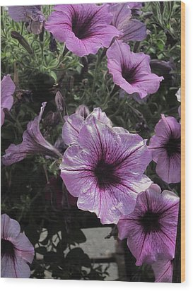 Faces Of Petunias Wood Print by Guy Ricketts
