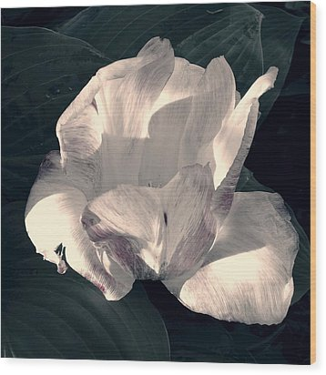 Wood Print featuring the photograph Faded Beauty by Photographic Arts And Design Studio