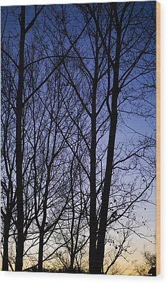 Wood Print featuring the photograph Fading Light Through The Sycamore Trees by Micah Goff