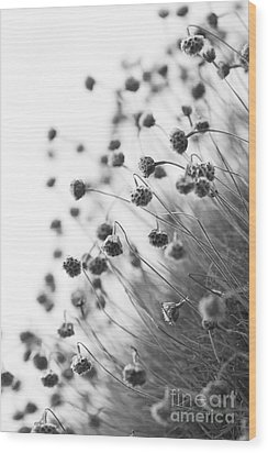 Fading Thrift Wood Print by Anne Gilbert