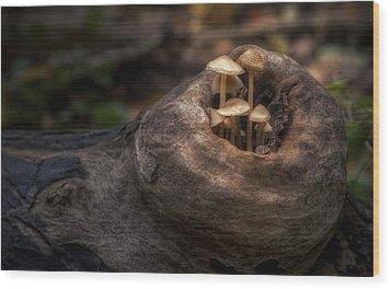 Fairie Garden Wood Print by Scott Norris