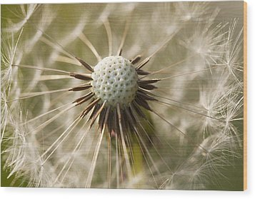 Dandelion Abstract Wood Print