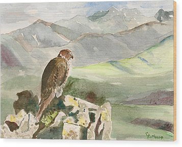 Falcon Wood Print by Christine Lathrop