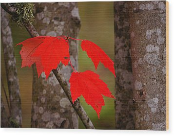 Fall Aflame Wood Print by Ronda Broatch