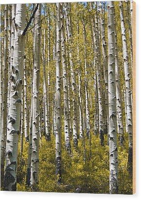 Fall Aspens Wood Print by Adam Romanowicz