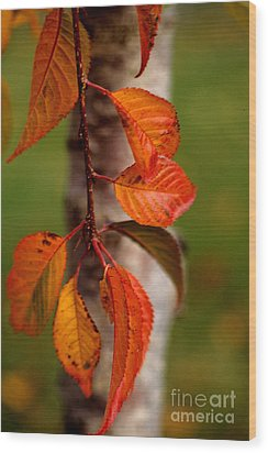 Fall Beauty Wood Print by Sharon Elliott