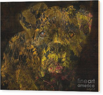 Fall Boxer Wood Print by Judy Wood