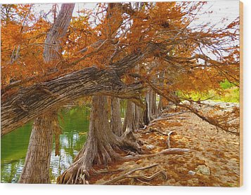 Fall Brilliance Wood Print by David  Norman