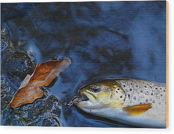 Fall Brown Trout Wood Print by Thomas Young