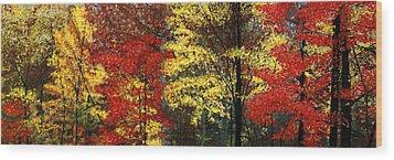Fall Canopy Wood Print