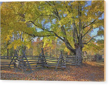 Fall Color #2 Wood Print by Wendell Thompson