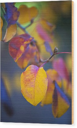Fall Color Wood Print by Stephen Anderson