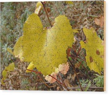 Fall Colors 6302 Wood Print