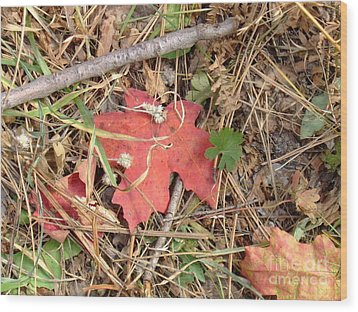 Fall Colors 6307 Wood Print