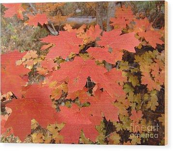 Fall Colors 6308 Wood Print