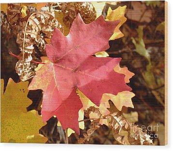 Fall Colors 6313 Wood Print