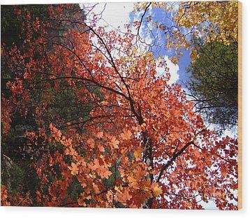 Fall Colors 6340 Wood Print