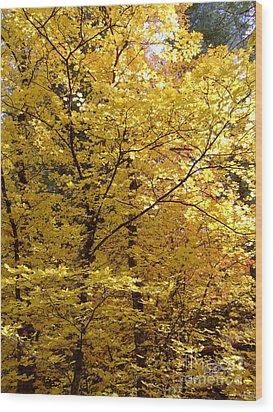 Fall Colors 6371 Wood Print
