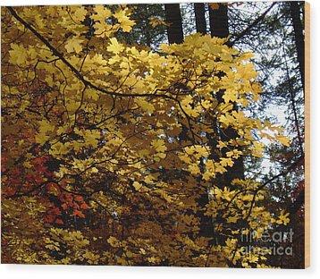 Fall Colors 6372 Wood Print