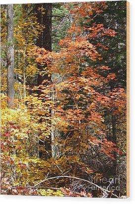 Fall Colors 6412 Wood Print