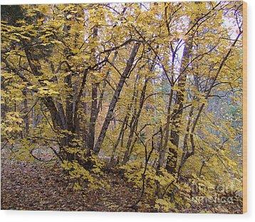 Fall Colors 6435 Wood Print