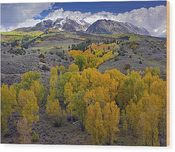 Fall Colors At Chair Mountain Colorado Wood Print by Tim Fitzharris