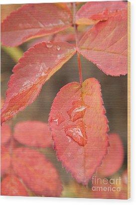 Fall Colors Wood Print by Jennifer Kimberly