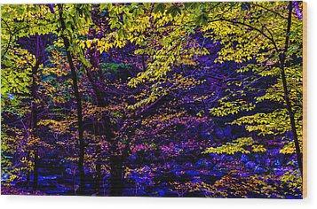 Fall Colors Wood Print by Louis Dallara