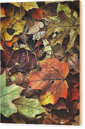 Fall Colors Wood Print by Lyle Hatch