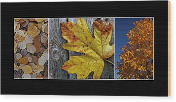 Fall Colors Triptych Wood Print by Patricia Strand