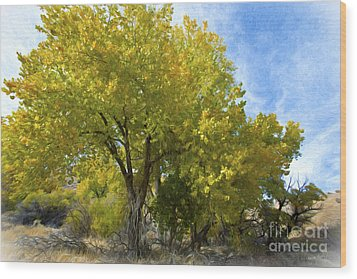 Fall Cottonwoods Wood Print by Dianne Phelps