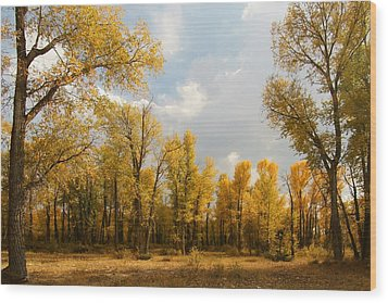 Fall Cottonwoods In Gros Ventre Wood Print by Jeremy Farnsworth