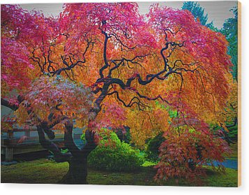 Fall Crowning Glory  Wood Print