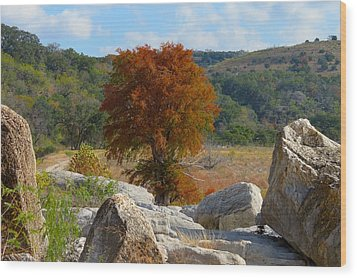 Wood Print featuring the photograph Fall Cypress by David  Norman