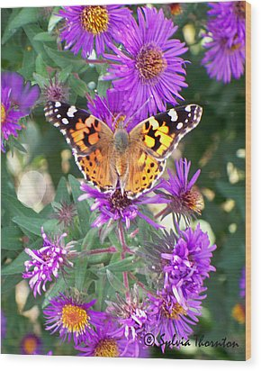 Fall Flutterby Wood Print by Sylvia Thornton