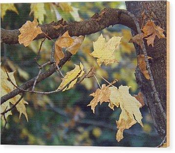 Fall Foilage Wood Print by Brenda Brown