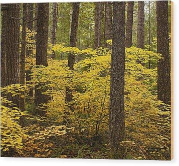 Fall Foliage Wood Print by Belinda Greb