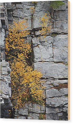 Wood Print featuring the photograph Fall Foliage Colors 01 by Metro DC Photography