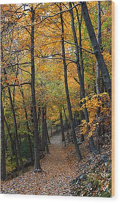 Wood Print featuring the photograph Fall Foliage Colors 03 by Metro DC Photography
